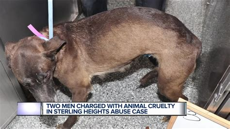 charges filed   men  animal cruelty