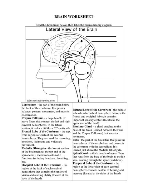 parts of the brain worksheet for grade 4 the human brain worksheets for science human