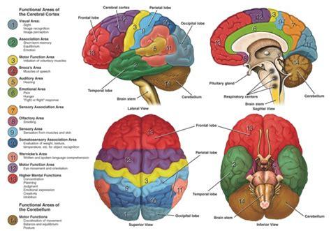 stroke physiopedia
