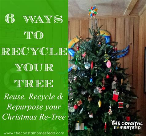 6 ways to recycle your tree recycle reuse repurpose