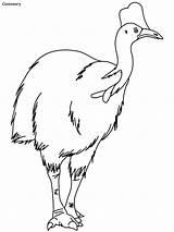 Emu Kinglets sketch template