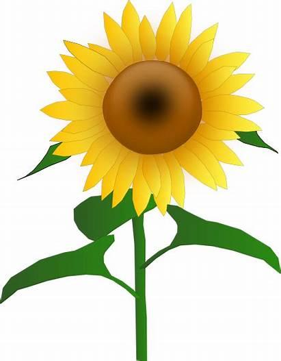 Sunflower Clip Jh Svg Clipart Clker Hi