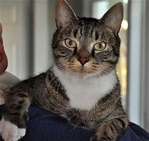 Feline Leukemia Virus In Cats