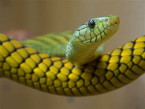 fun  dangerous snakes