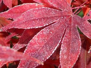 Kostenlose Bilder Herbst : herbst kostenlose hintergrundbilder ~ Yasmunasinghe.com Haus und Dekorationen