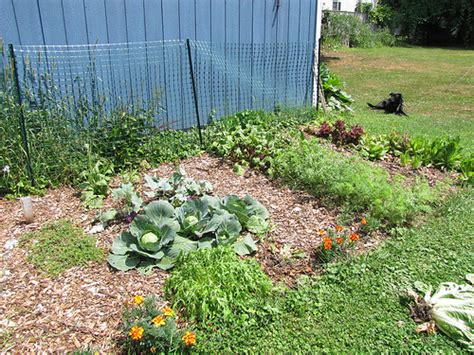 vegetable garden mulch ideas best mulch for vegetable garden
