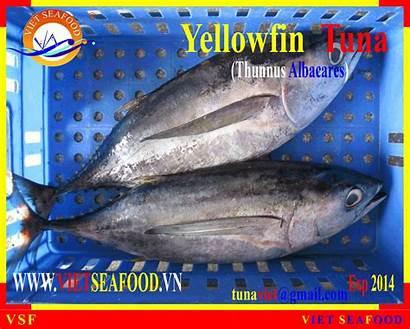 Tuna Frozen Whole Yellowfin Round Diytrade China