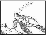 Turtle Coloring Pages Printable Sea Colouring sketch template