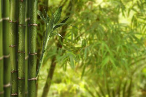 canape pas cher payable plusieurs fois 105 bambous artificiels pour exterieur bambou artificiel