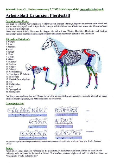 grundschule kuhbach aktivitaeten pferde