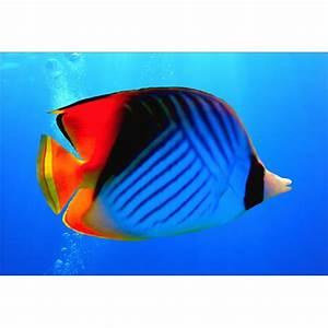 Deco Multicolore : papier peint g ant d co poisson multicolore 250x360cm art d co stickers ~ Nature-et-papiers.com Idées de Décoration