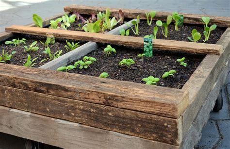 Vertical Gardening, Raised Beds & Biodiversity
