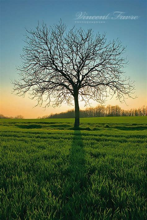 naturally beautiful   trees world  pictures