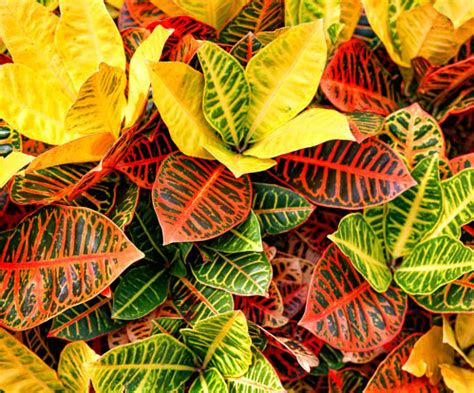 piante da interno con poca luce piante per interno con poca luce awesome piante per