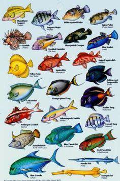 types  fish google search  projecct pinterest