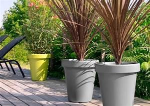 Arbre En Pot : quel arbre a mettre en pot ~ Premium-room.com Idées de Décoration