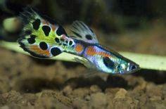 tropical fish images tropical fish fish