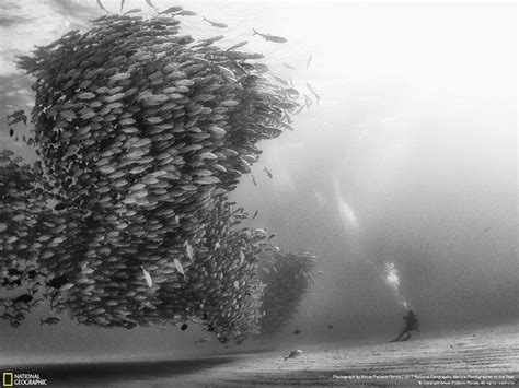 Winners Of The 2017 Nat Geo Nature Photographer Of The