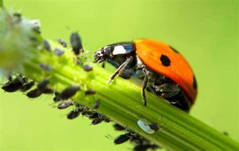 tipps fuer mehr nuetzliche insekten im garten mein