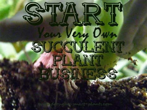 How To Start Nursery Plant Business by Sedum And Succulent Nursery Growing My Favorite Plants