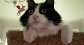 cat shocked great britain news and photos perez