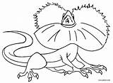 Lizard Coloring Frilled Printable Cool2bkids sketch template