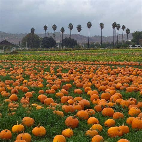 Westfield Main Place Pumpkin Patch by Download Free Pumpkin Patch Pomona California Getrutracker