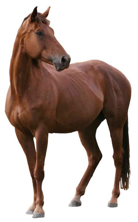 horse pngh baldivis vet hospital