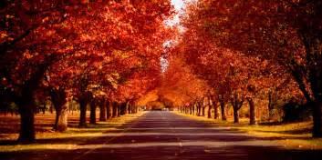 Bildresultat för trees in the fall