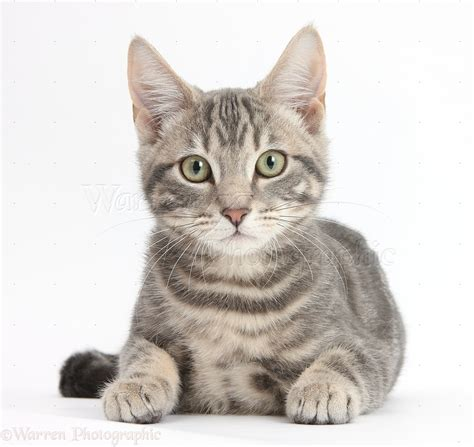 Cat Head  Google Search  Meow  Pinterest Cats