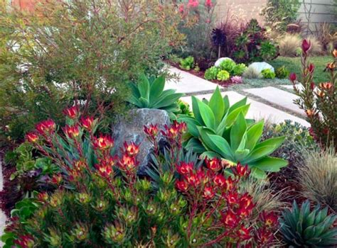 Garden Decoration With Plants by 38 Beautiful Aeonium Succulents Plants For Garden