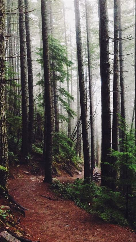Forest Woods Path Pine Trees #iPhone #6 #wallpaper