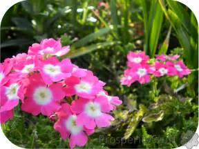 Perennial Pink Spring Flowers