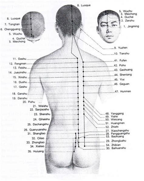 meridien du poumon acupuncture le m 233 ridien de la vessie et tendino musculaire acupuncture et naturopathie
