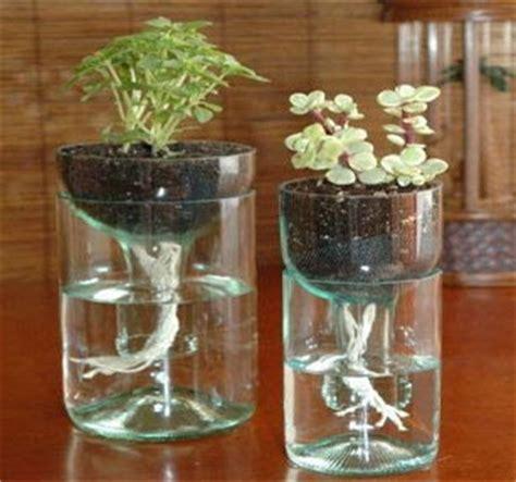 langkah langkah membuat tanaman hidroponik botol