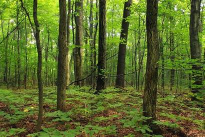 Forest During Trail Nature Pxhere Adventure Mountaintop