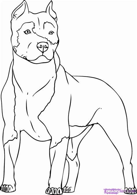 pitbull dog coloring pages coloring home