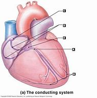 Best 25 ideas about heart conduction find what youll love heart electrical conduction system diagram ccuart Choice Image