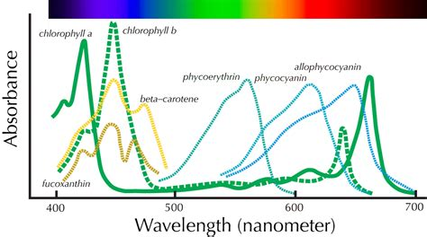 examples of absorption spectra of photosynthetically ...