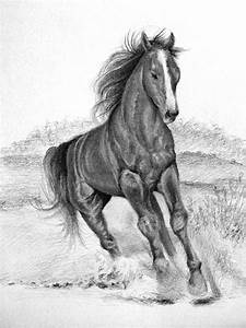 Pencil Sketches Of Horses Step By Step Drawing Tutorials ...