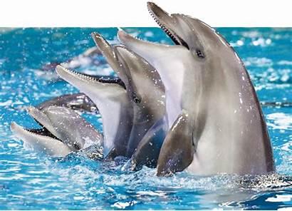 Dubai Dolphin Dolphinarium Seal Dolphins Tickets Shows