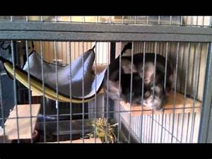 My Chinchilla Cage and General Ownership Information - YouTube