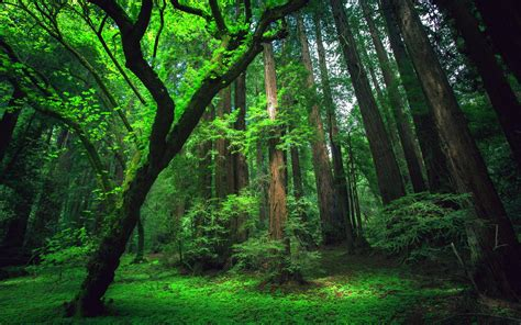 Image result for AMAZON RAIN FOREST
