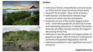 Water  U0026 Carbon Cycle Case Study  Indonesian Rainforest