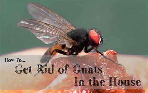 rid  gnats   house