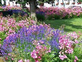 Lavendel Wann Schneiden : garten anlegen lavendel und was dazu garten pinterest garden ~ One.caynefoto.club Haus und Dekorationen