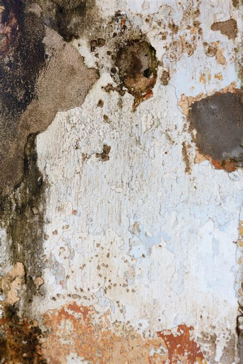 mold wall  stock photo public domain pictures