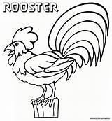 Rooster Coloring Sheet Colorings sketch template