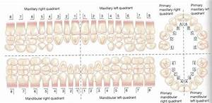 Tooth Chart With Numbers And Letters Dental Charting At Cdi College Studyblue