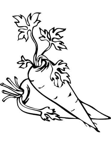 carrots coloring page  printable coloring pages